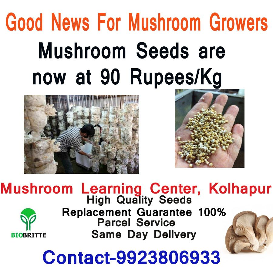 Mushroom Seeds/Mushroom spawn are available- Courier Service