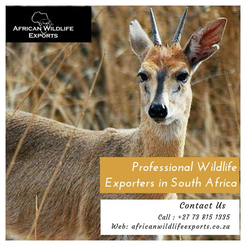 African wildlife exports - wildlife & livestock to all parts of the world
