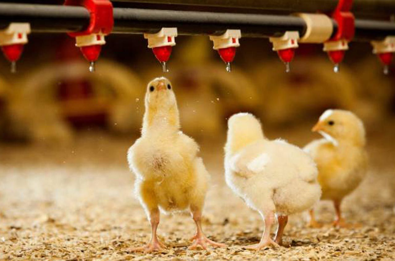 Best Poultry Farm Management Software