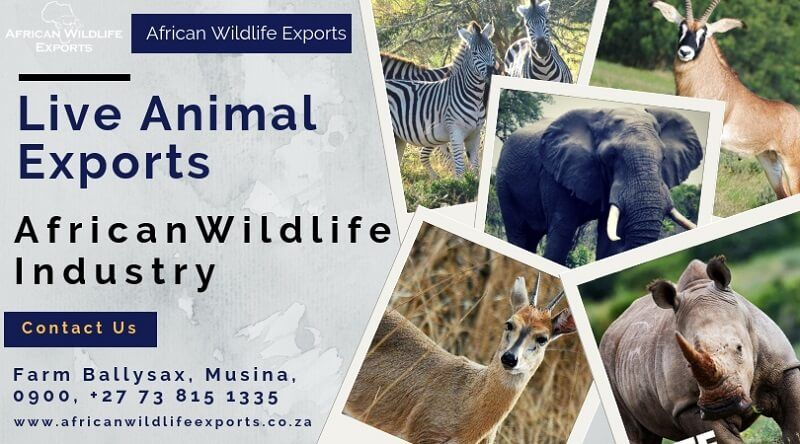 Get the legal wildlife Live Animals exports South Africa