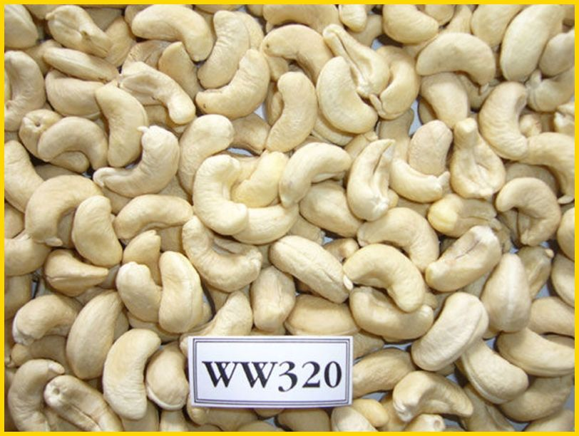 CASHEW NUT FOR SELL
