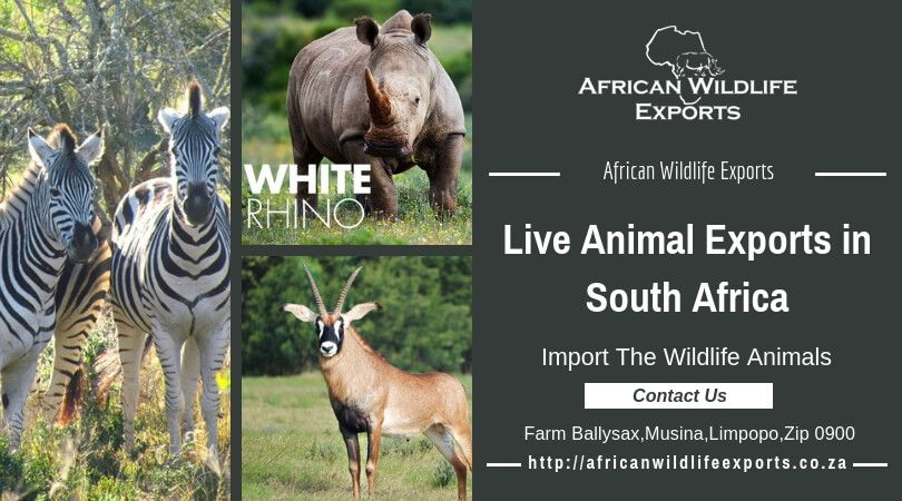 Live animal exports South Africa, import the wildlife animals