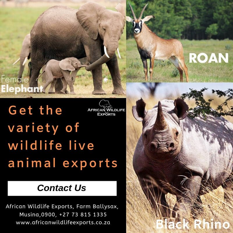 Get the wide variety of wildlife live animal exports South Africa