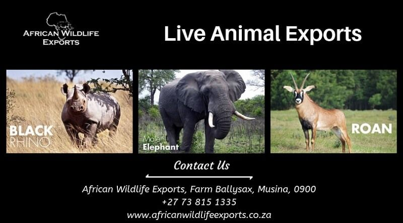 Looking for the wildlife live animal exporter in South Africa?